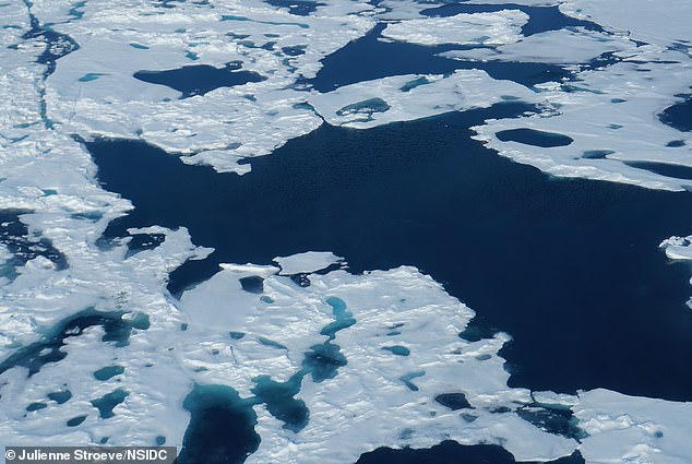 北極飆38度高溫!專家估15年內「北極海冰融光」:2100年北極熊消失