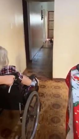 迷你汪每天咬「體型5倍大地毯」幫開路:這樣阿嬤的輪椅才好過❤