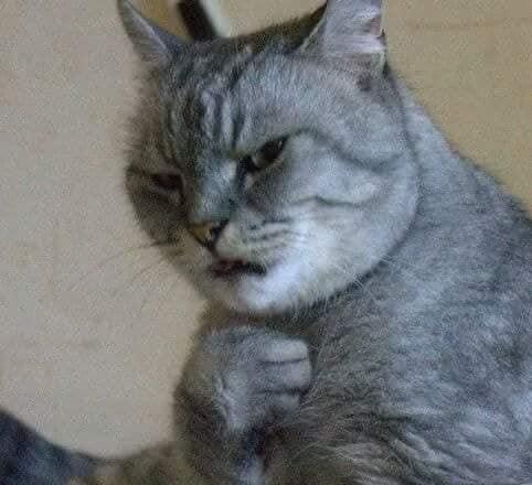 29隻很想入圍「貓界奧斯卡」的超有戲貓咪!