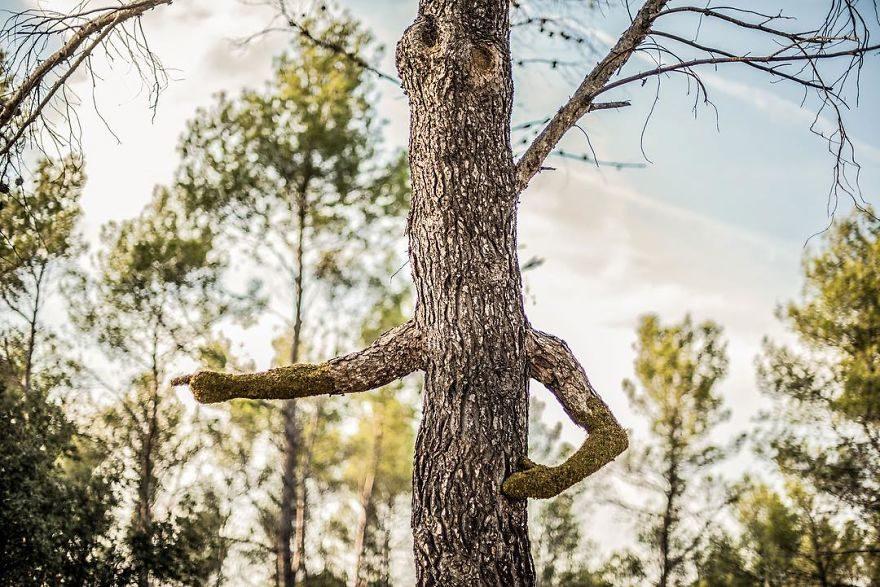 植物大師打造「有機藝術」比雕塑還美 這次讓大自然主宰人類!