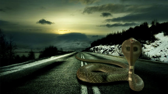 动物巨大化