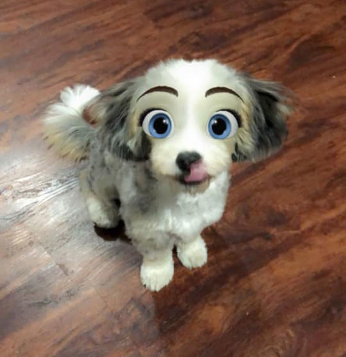 主人玩瘋「把寵物變迪士尼角色」濾鏡 博美秒變《小姐與流氓》!