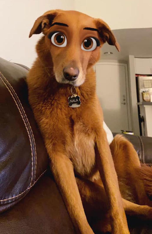 迪士尼狗狗濾鏡