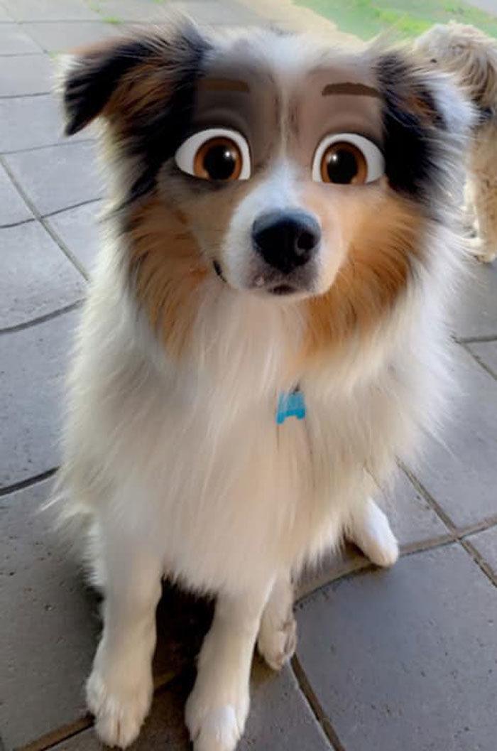 迪士尼狗狗滤镜