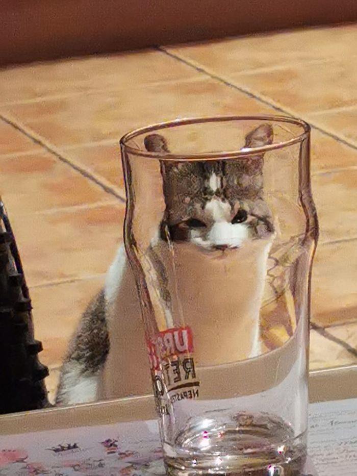 玻璃看动物