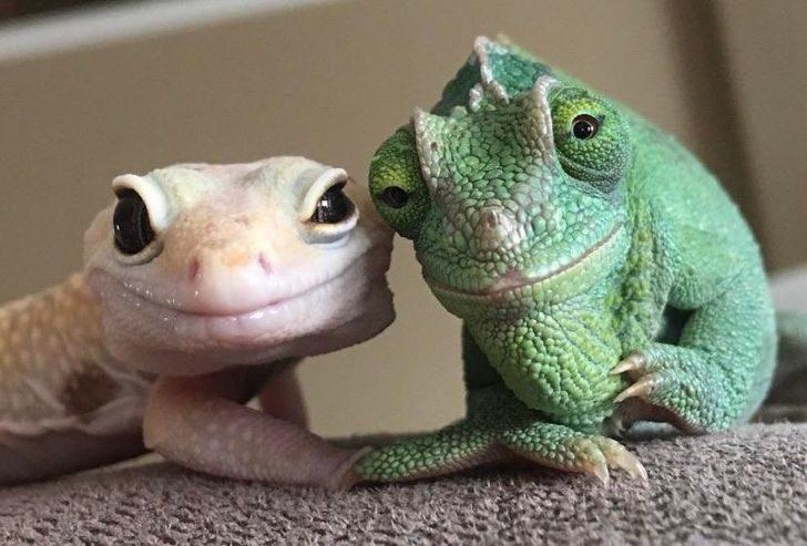 17張證明「幸福的源頭是動物」照 狗狗開心到連鼻子都在笑❤