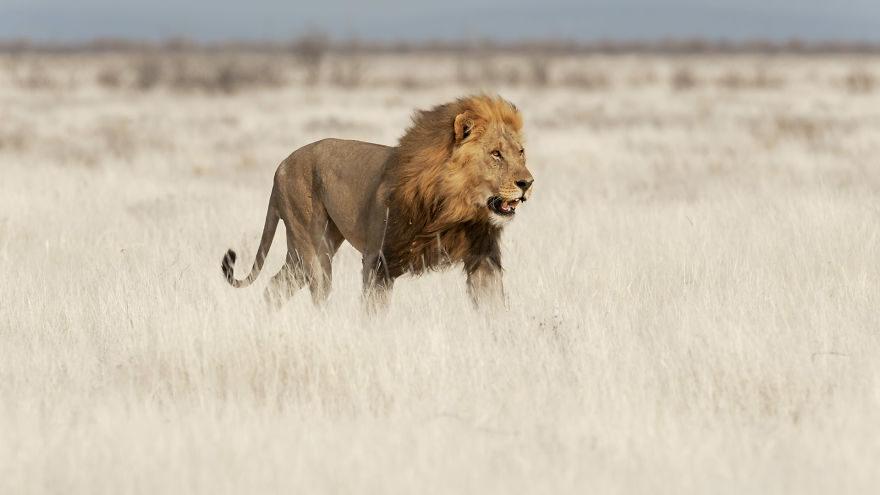 大自然動物照