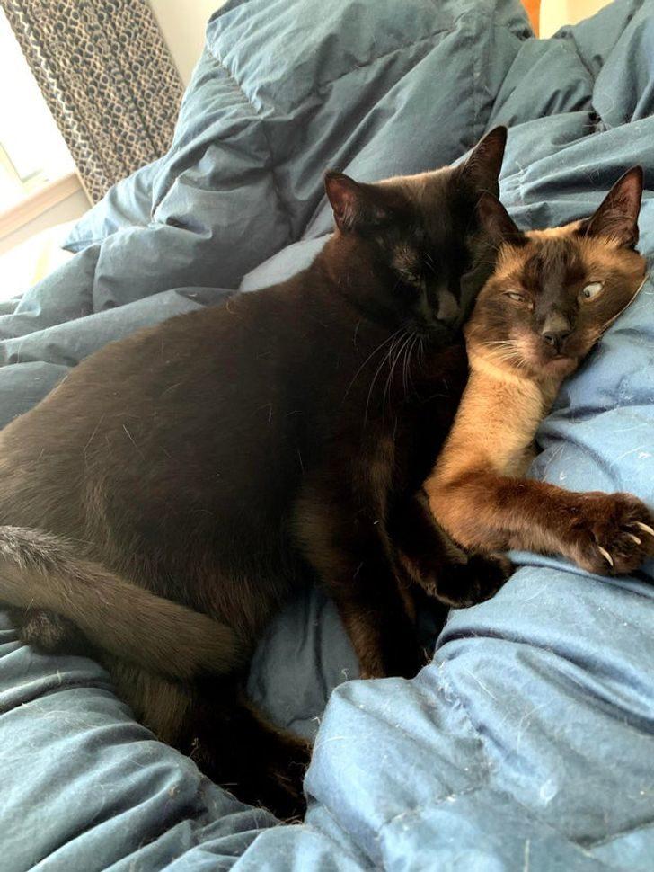 17個「貓咪是霸道總裁」的證明 牠把同伴舉起來「辦宗教儀式」