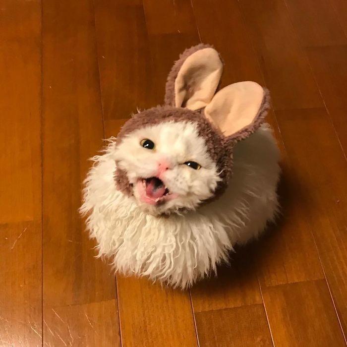 「披羊皮的貓皇」爆萌Q捲毛 表情「永遠都在不爽」超反差!