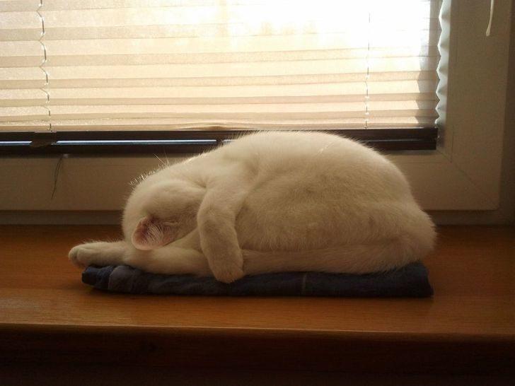 動物席地而睡