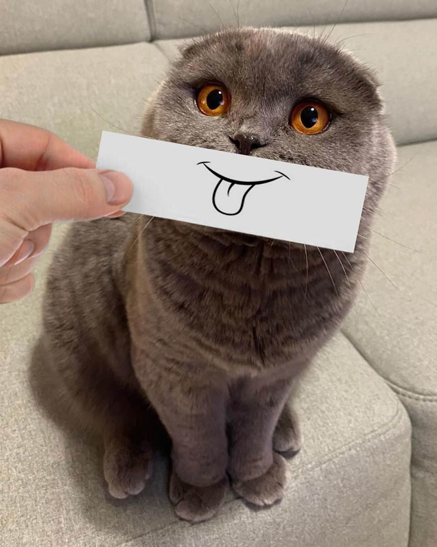 貓咪表情擴充