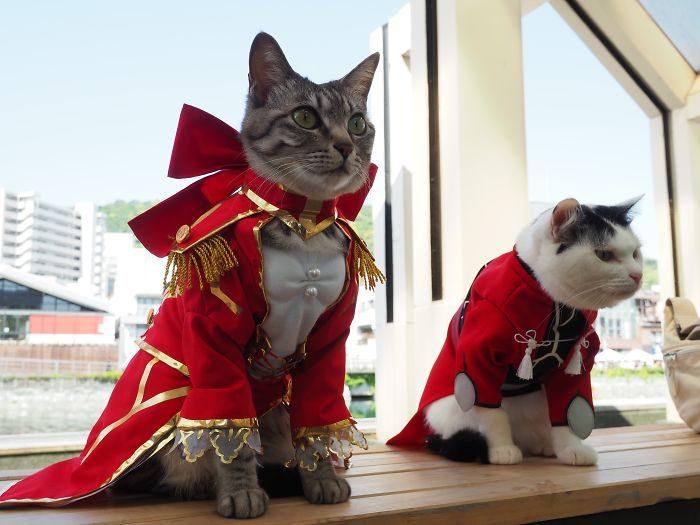 貓咪「cosplay動漫角色」還要奴才幫拍照 龍貓「貓巴士」超欠撸!