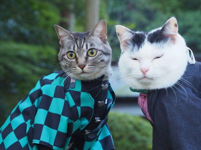 貓咪cosplay動漫人物
