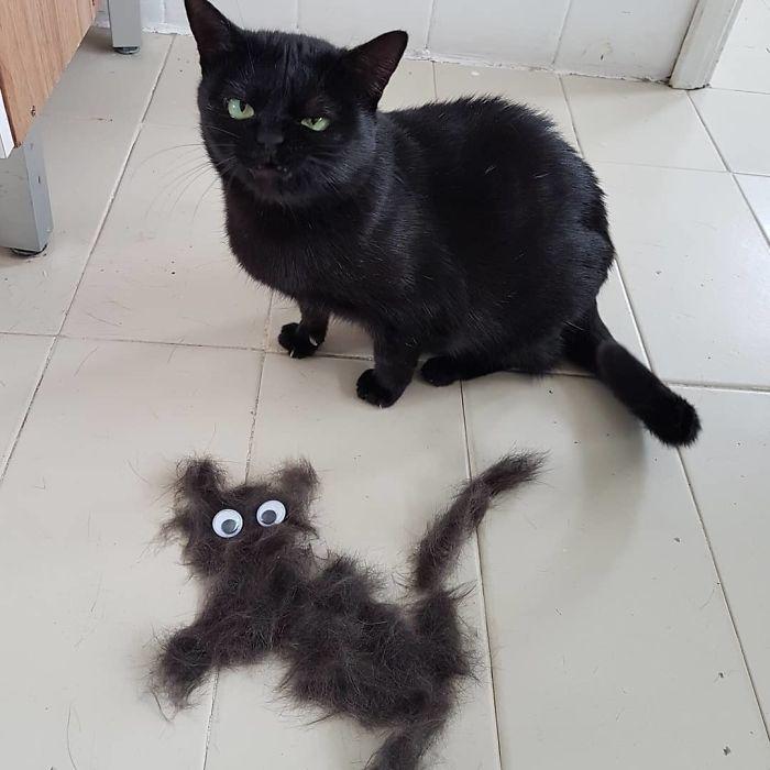 21張「沒演八點檔太可惜」的貓咪 發現「自己懷孕」表情太真實