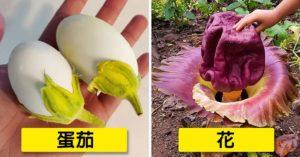 18張大自然「連上帝也騙過」的偽裝照 保齡球瓶形狀雞蛋太可愛!