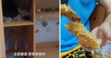 回宿舍驚見「超大蜂巢」附1公斤蜂蜜!他直接吃掉:味道還可以