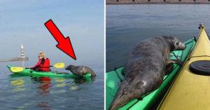 小海豹「撲通跳上船」搭便車 遊客笑翻:最萌的不速之客❤