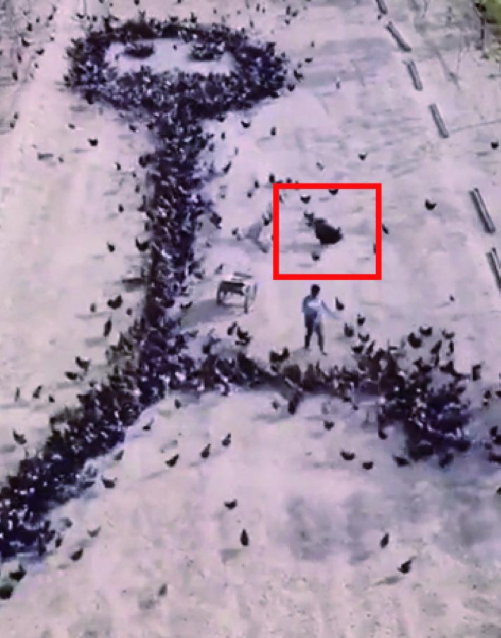 天才男讓一大群小鳥「幫忙畫畫」 最後拼出「巨大波動拳」成品超狂!