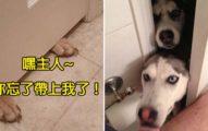 5個狗狗愛跟著你上廁所的原因 「什麼隱私?我必須保護你啊主人」
