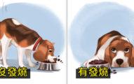 奴才注意!7個「狗狗發燒」會有的症狀 從「眼睛」就能看出端倪!