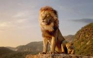 真獅版《獅子王》要出第2集啦!確定由奧斯卡最佳影片「名導」接棒