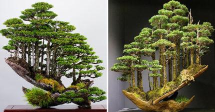 大師把「整座森林」種在盆栽 每個細節「充滿靈魂」紅到國外