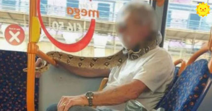 公車驚見老翁戴「活生生口罩」乘客嚇歪 運輸公司:沒剝皮絕對不行!