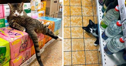 37隻「佔領人類世界」的惡棍貓貓 霸佔前還乖乖量額溫太傲嬌