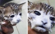 38隻貓貓「偷吃被抓包」萌照 牛奶舔到長山羊鬍太可愛❤