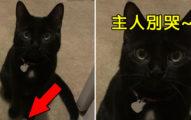 主人難過哭泣 暖心貓送「4個珍藏寶貝」安慰:感覺好一點嗎?