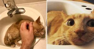 貓咪太愛「霸佔水槽」主人用不到 送上「神秘禮物」秒解決問題