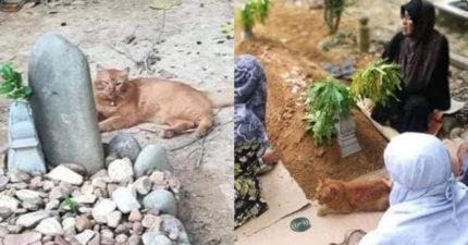 忠貓「主人離開世界」走不出陰影 每天早上「掃墓」長達2年!
