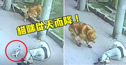 遛狗卻被貓「從天而降」砸暈 汪星人一看跑去「跟貓battle」!