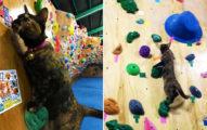 攀岩貓館長示範路線爆紅 「跳躍式攀爬」比人類還秋