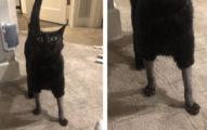 貓星人看獸醫後「褲子不見了」  牠瞪大眼:你們對偶做了什麼?!