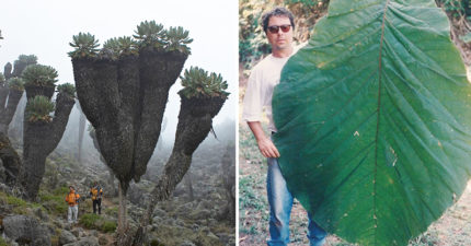 15個讓你以為誤闖巨人國的「超巨大物體」 太陽花根本像異形!