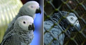 一看到人就罵「胖子」!鸚鵡學壞「集體飆髒話」嗆遊客 動物園崩潰隔離