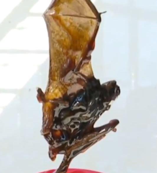 蠔油出現「整隻蝙蝠」讓他崩潰 廠商竟「補送2桶」當賠償