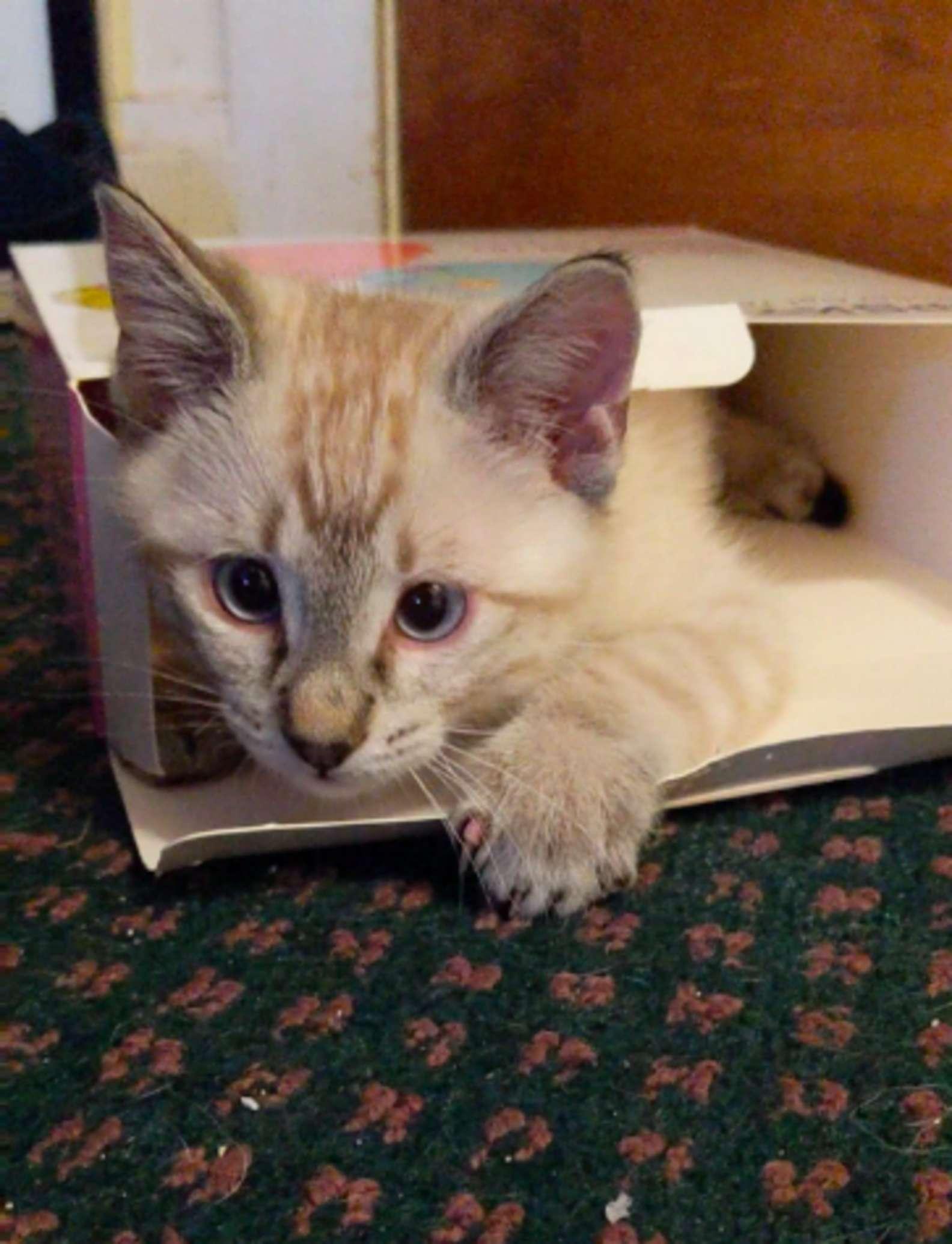 呆貓刷存在感「狂偷滑鼠」一指神功摸走...馬麻無奈到融化