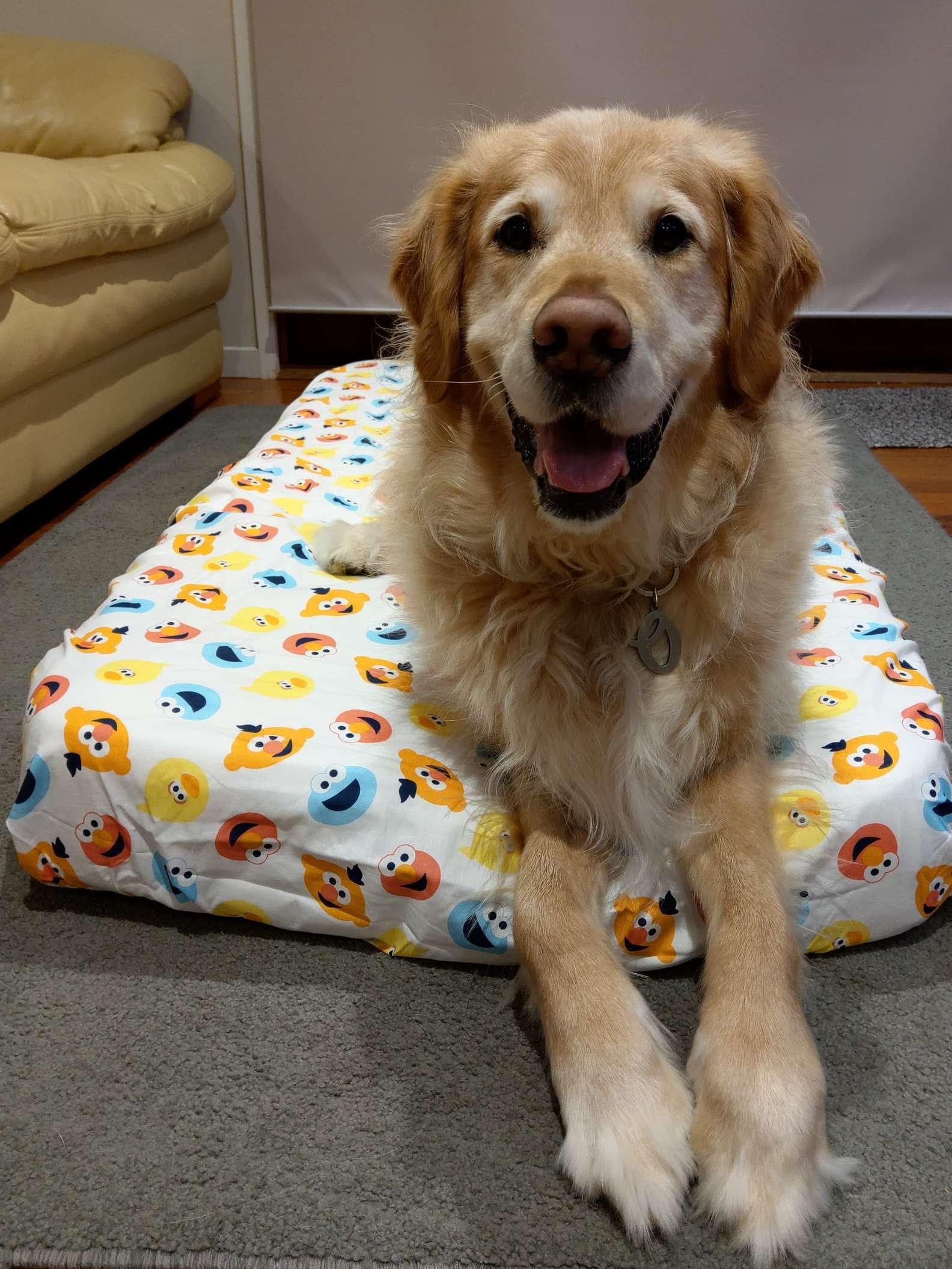 傲嬌爸不想養狗 相處後「秒被收服」抱抱睡比親生的還疼!