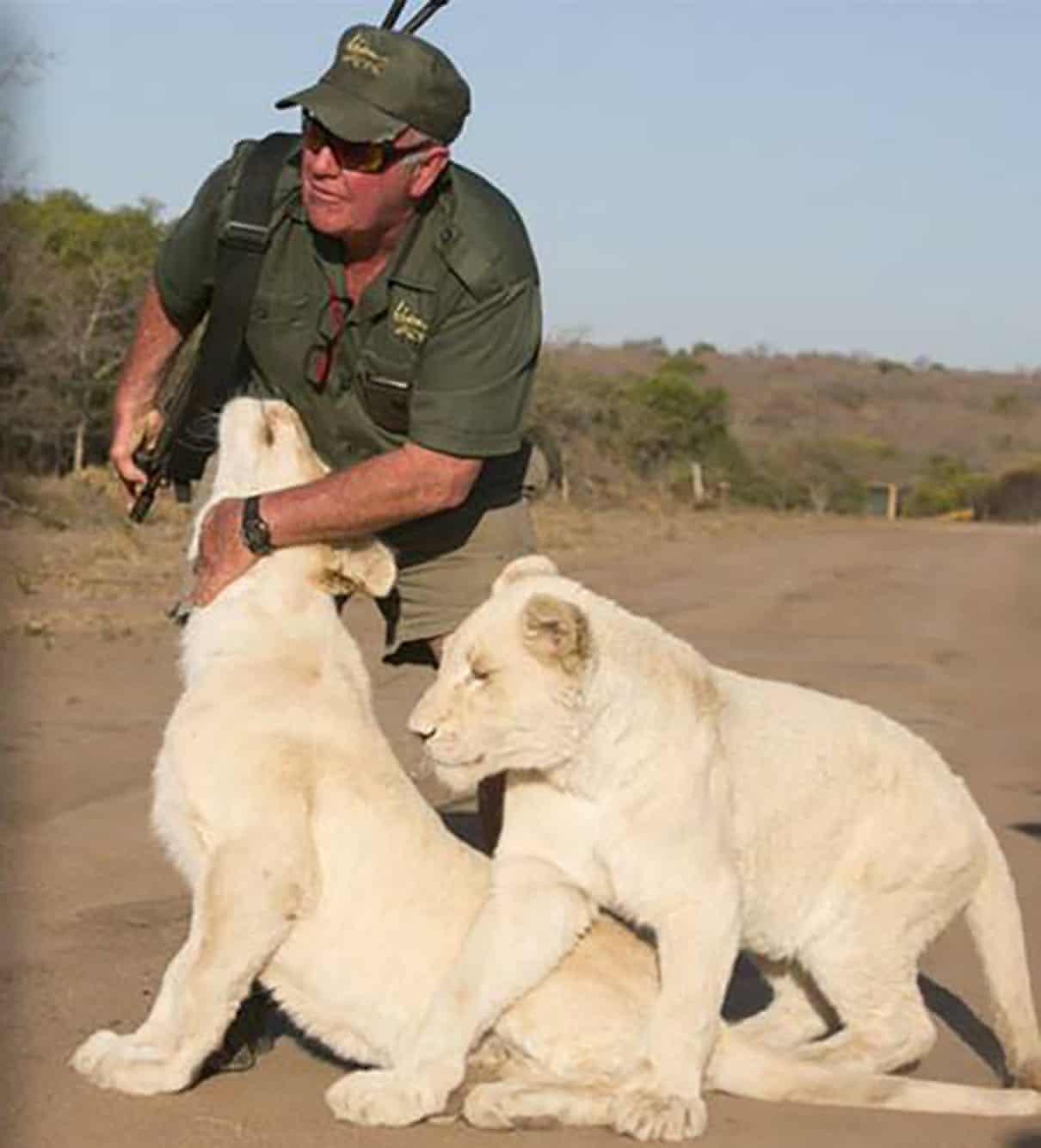 老闆養兩隻獅子當店寵 「做客人前做秀」員工想救他卻晚了