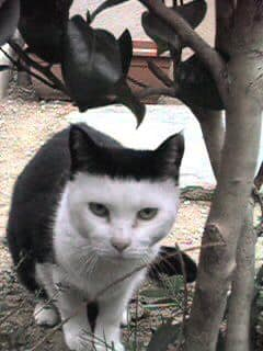 22隻因「貓貓工廠出錯」造成的意外美 「死侍貓」比本尊更帥