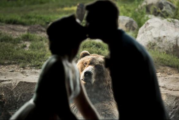 萌熊「滿臉問號」亂入新人合照 親下去大傻眼...終結浪漫