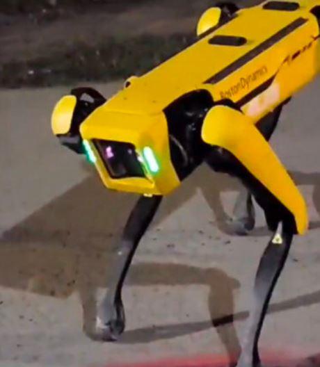 上百隻「機械狗」在各地出沒 民眾嚇瘋:《黑鏡》真實上演?