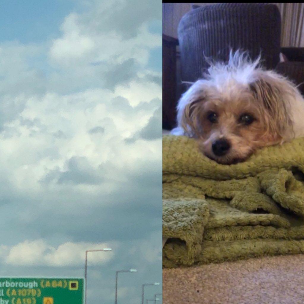 毛孩離開「雲朵飄出」守護的證據 媽媽淚崩:牠去了更好的地方
