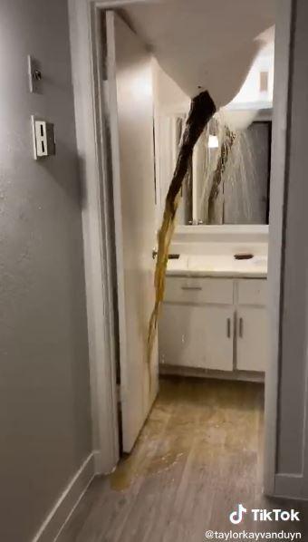 新房入住4天直接崩壞 毀滅級「天屎散花」一夕爆紅