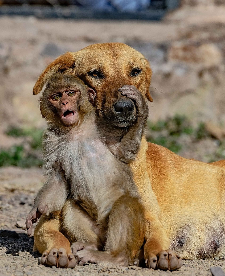 溫柔狗媽大愛「收養孤兒小猴子」 調皮猴囝仔各種吵都不生氣