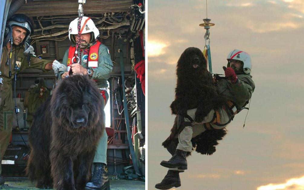 救生汪搭直升機「空降大海」出動 一年平均救3000條命