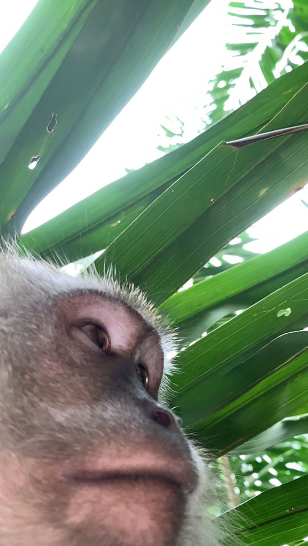 屁猴偷手機還「送上自拍照」回禮 網美風「憂鬱側臉」比模特專業!
