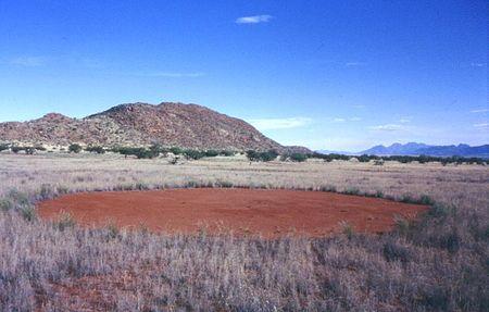 神的腳印?神秘「仙女圈」遍佈沙漠 科學家推測3個最可能原因
